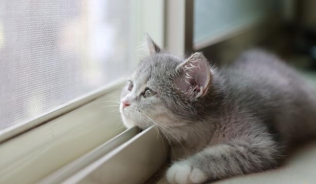 москитная сетка антикошка Установите её  на окно и Ваш кот в безопасности